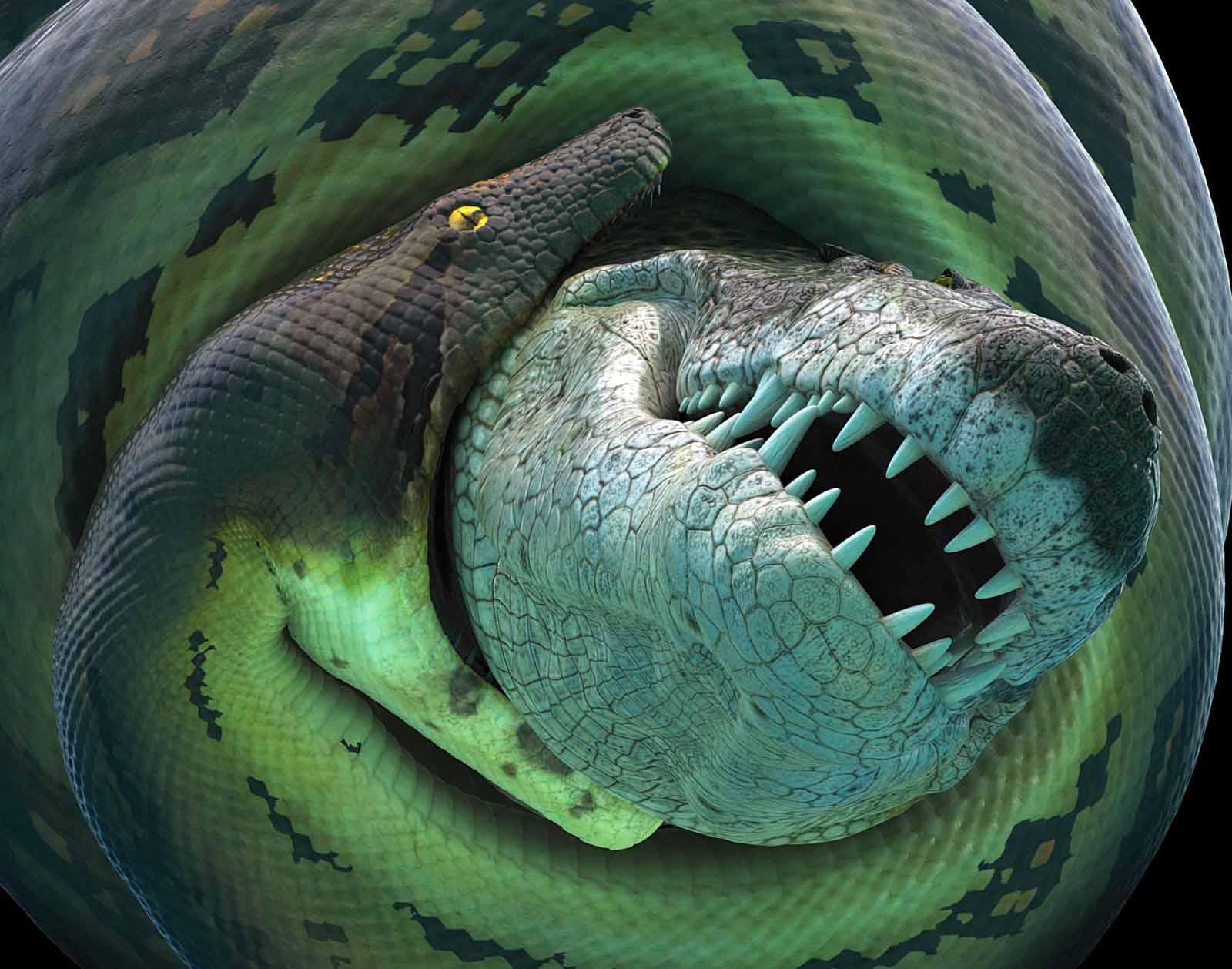 titanoboa devorando cocodrilo