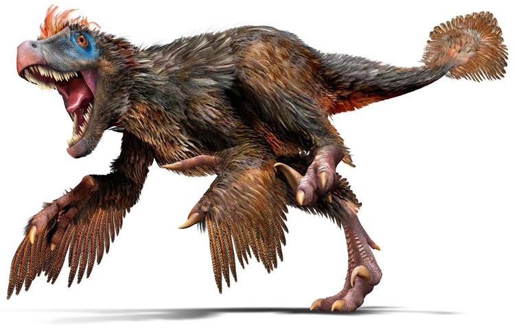 Por extraño que parezca, este era el verdadero aspecto del velocirraptor. Un dinosaurio de a penas 50 centímetros de altura (si bien hubo especies más grandes). Las plumas de las patas delanteras, que les dan a estas extremidades verdadero aspecto de alas pudieron ayudarle a cambiar de dirección de manera brusca en la carrera.