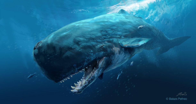 prehistoric_mammals___livyatan_melvillei
