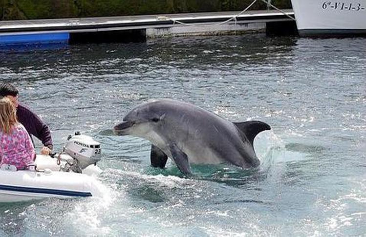 gaspar-delfin