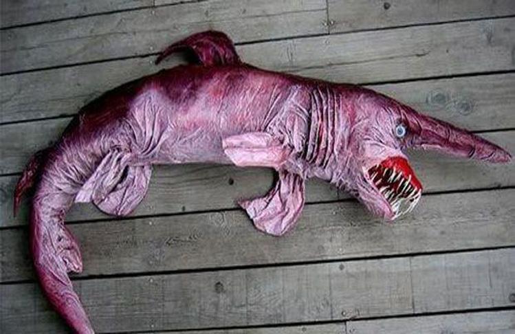 Si solo el tercio anterior del animal y dejaba con la boca abierta, el resto del cuerpo no es menos grotesco.