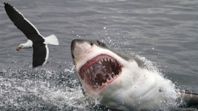 150723121141_tecnologia_evitar_ataques_tiburon_624x351_thinkstock