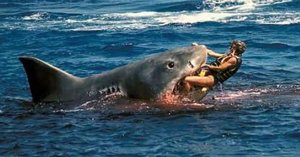Impresionante! Así es el ataque de un tiburón