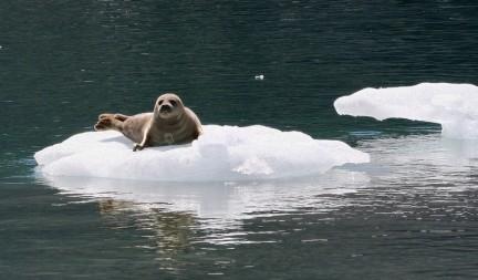 Ecologiablog_focasobretrozohielo