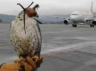 halcones-aeropuertos