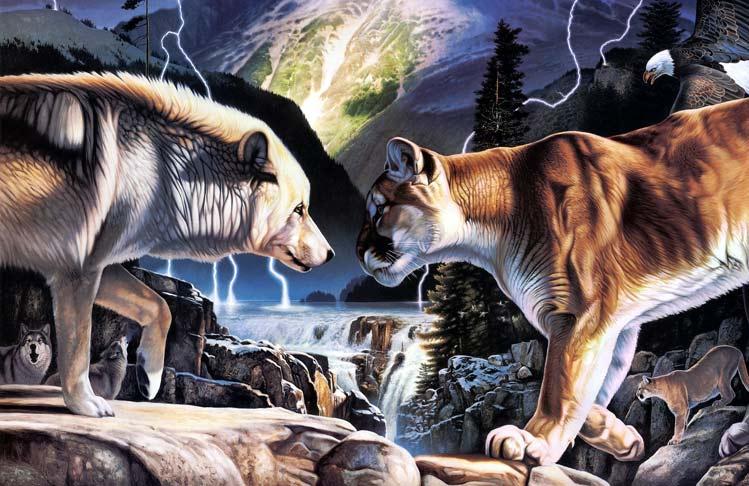 lobo-contra-puma