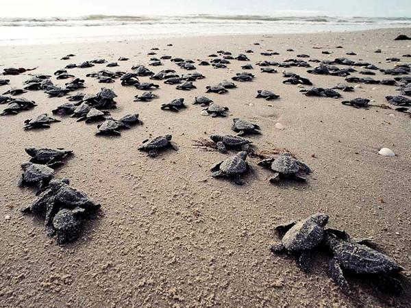 tortugas bebe