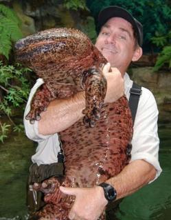 anfibio gigante