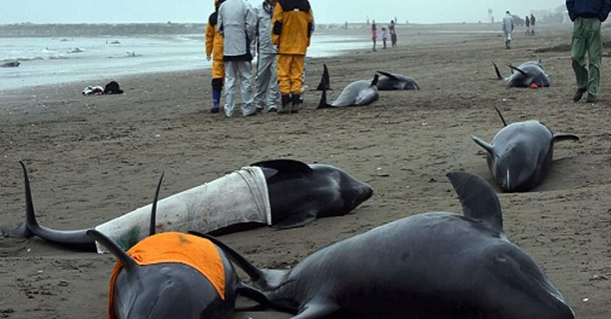 delfines-fukushima