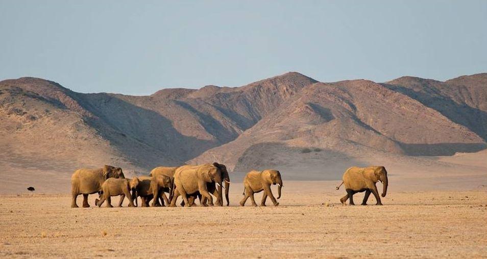 b_nuestro_alojamiento_en_la_tierra_de_los_elefantes_de_desierto__wilderness_damaraland_camp__namibia_28429
