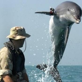 delfín militar