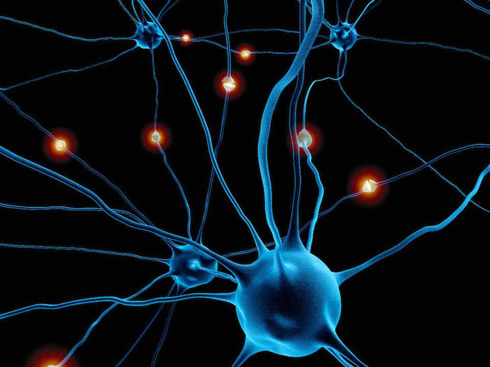 conexiones-neuronales-c